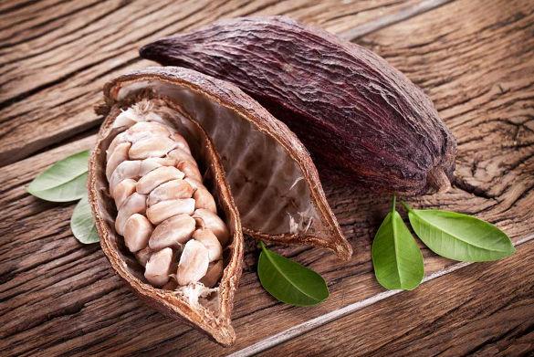 kakaové bôby Criollo